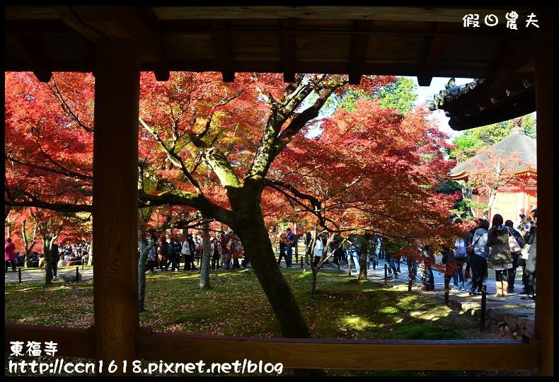 東福寺DSC_5197