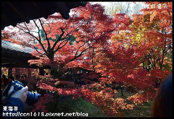 東福寺DSC_5202