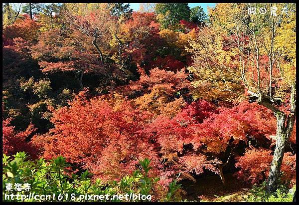 東福寺DSC_5217