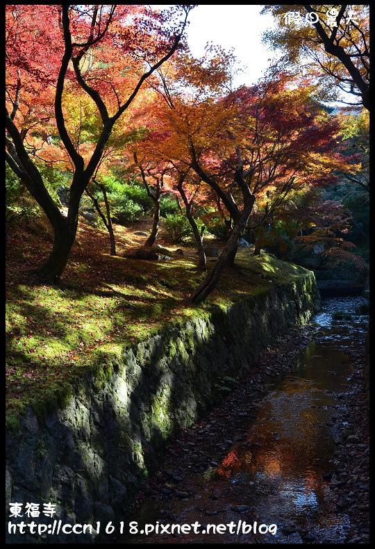 東福寺DSC_5244