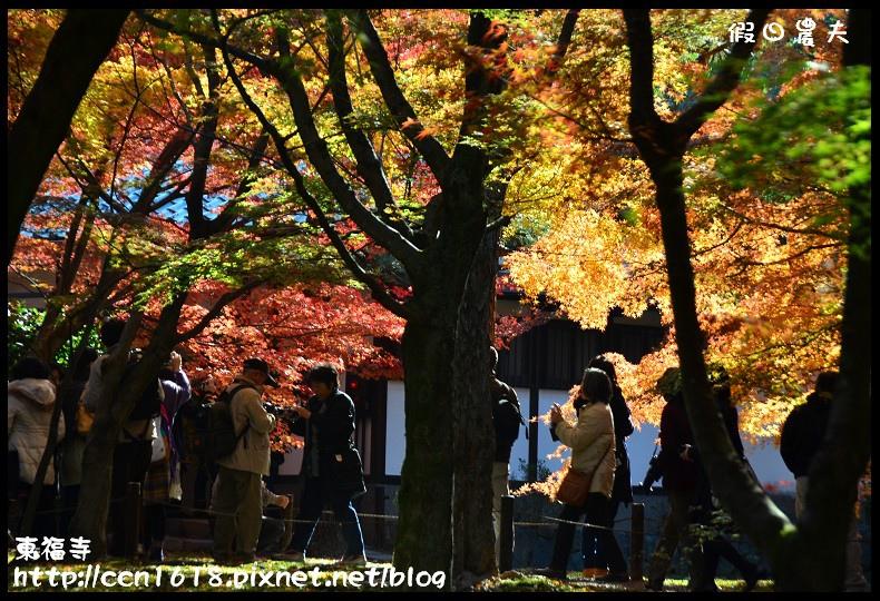 東福寺DSC_5294