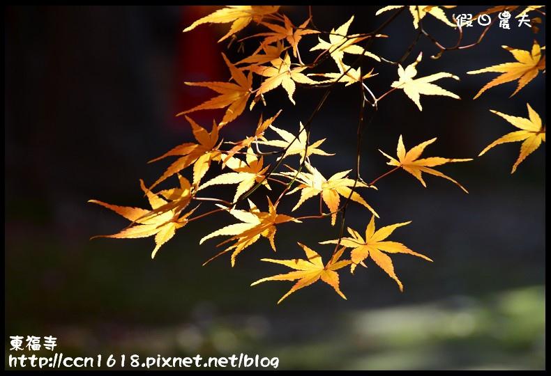 東福寺DSC_5303