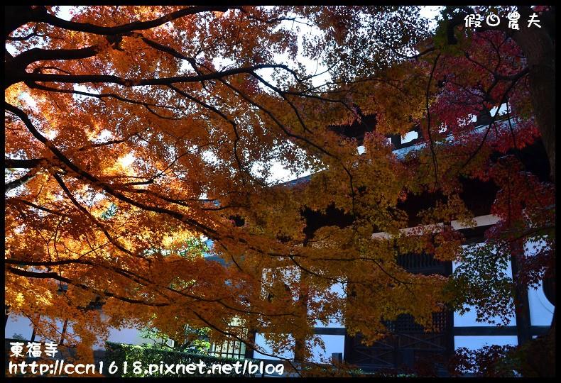 東福寺DSC_5301