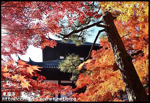 東福寺DSC_5311