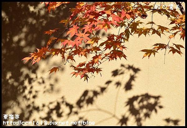 東福寺DSC_5327