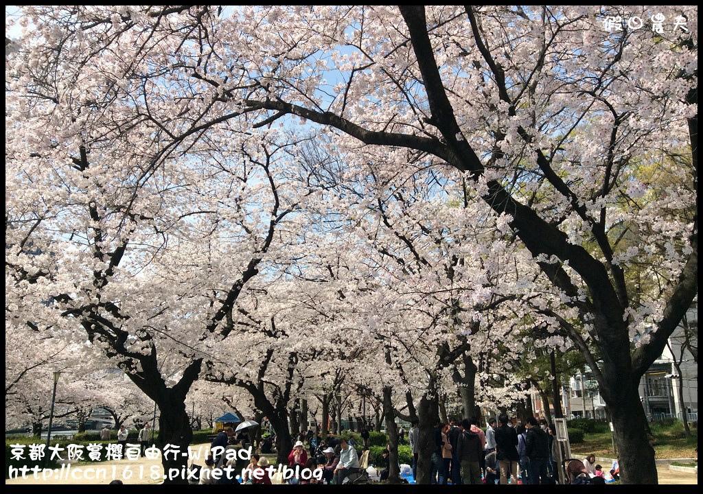 京都大阪賞櫻自由行-WiPad京都大阪櫻花 070