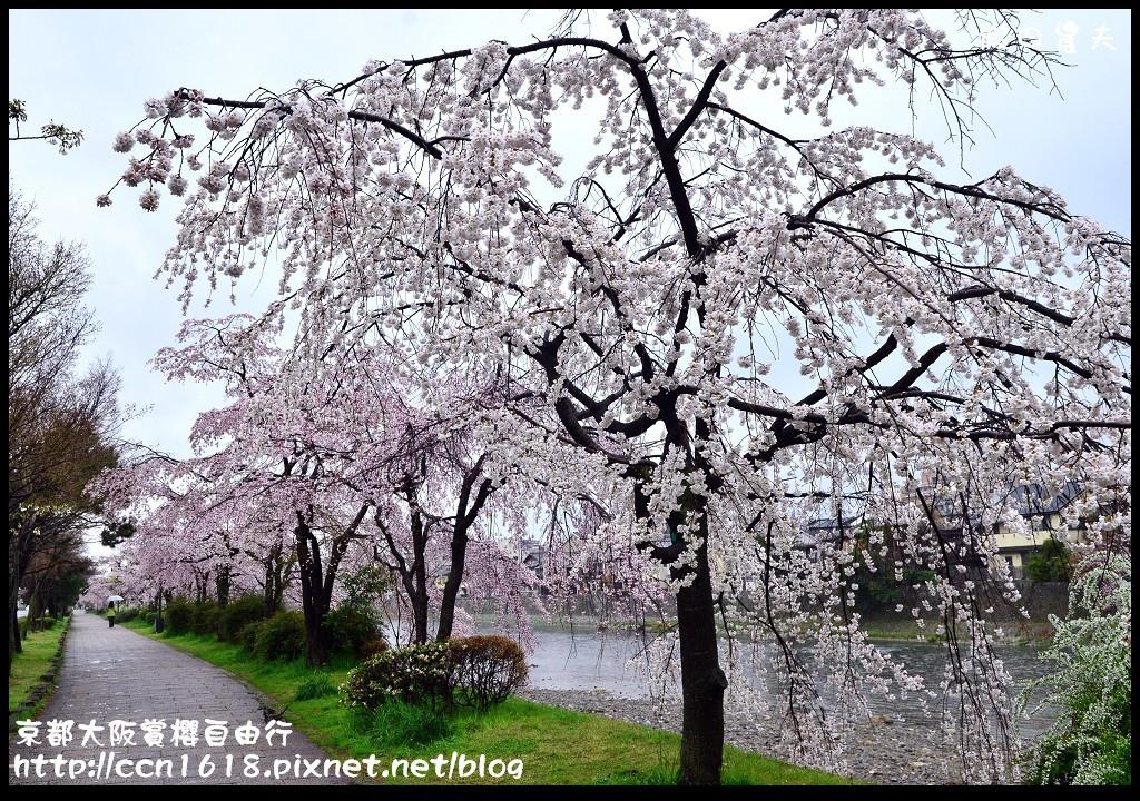 京都大阪賞櫻自由行DSC_0729