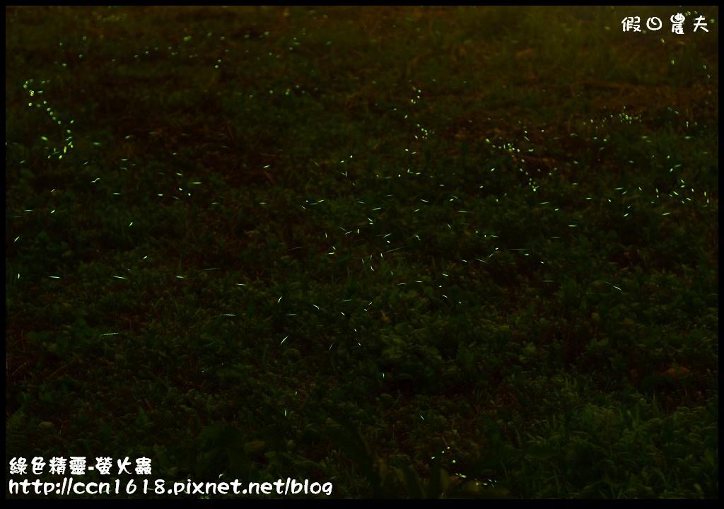 綠色精靈-螢火蟲螢火蟲5