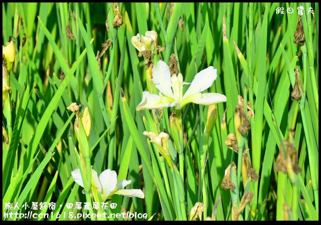 旅人小屋舒宿DSC_6501