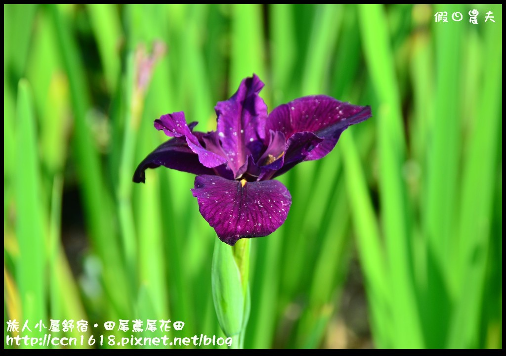 旅人小屋舒宿DSC_6504