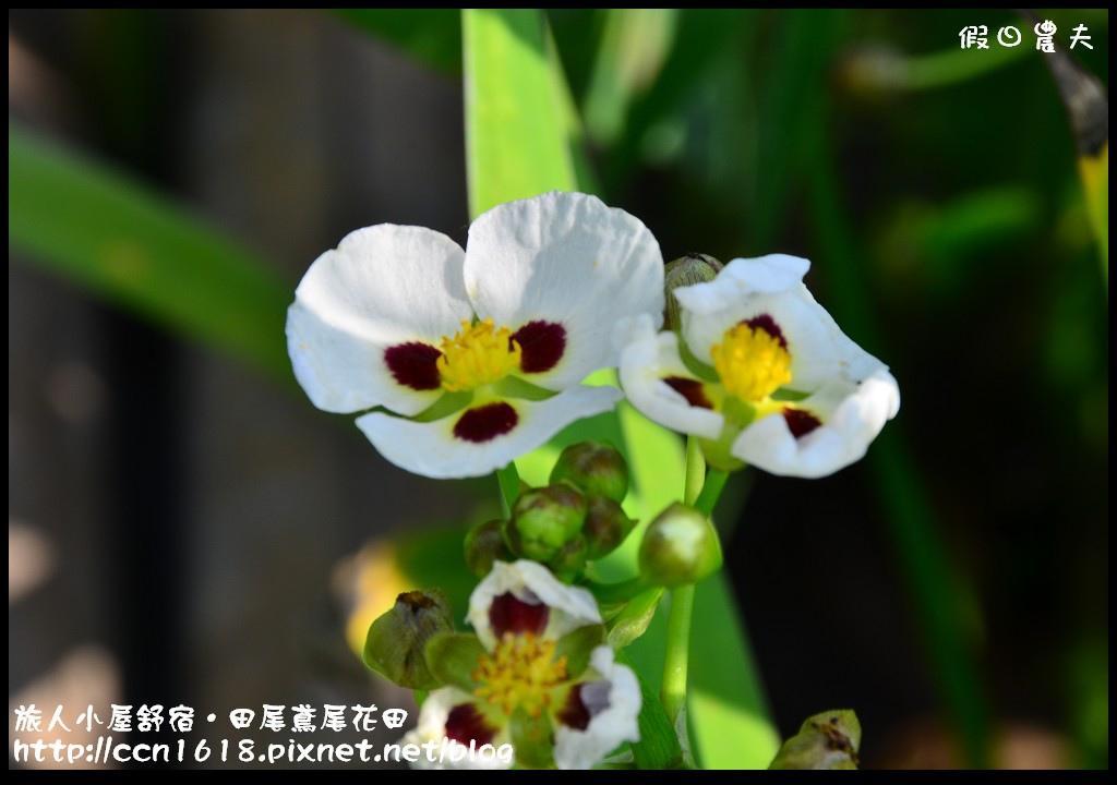 旅人小屋舒宿DSC_6515