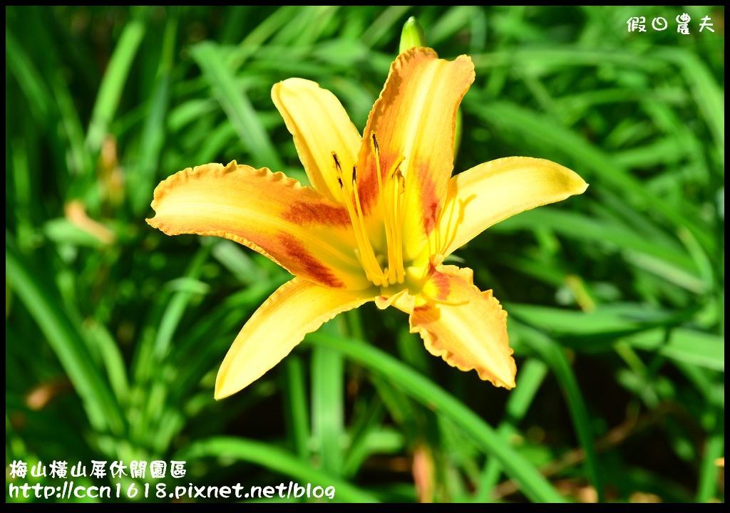 梅山橫山屏休閒園區DSC_7986