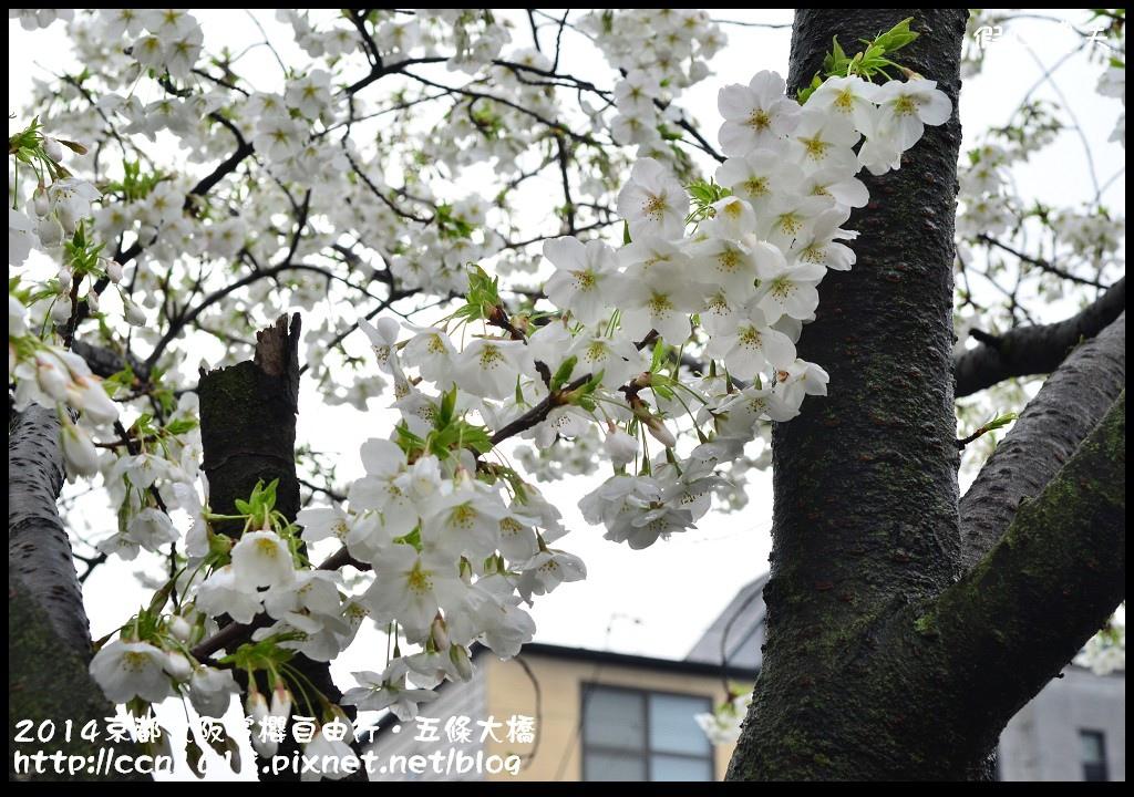2014京都大阪賞櫻自由行.五條大橋DSC_0717