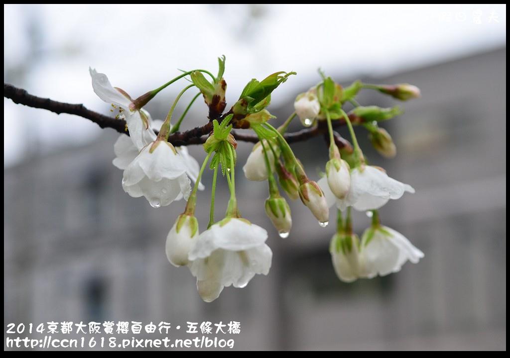 2014京都大阪賞櫻自由行.五條大橋DSC_0722
