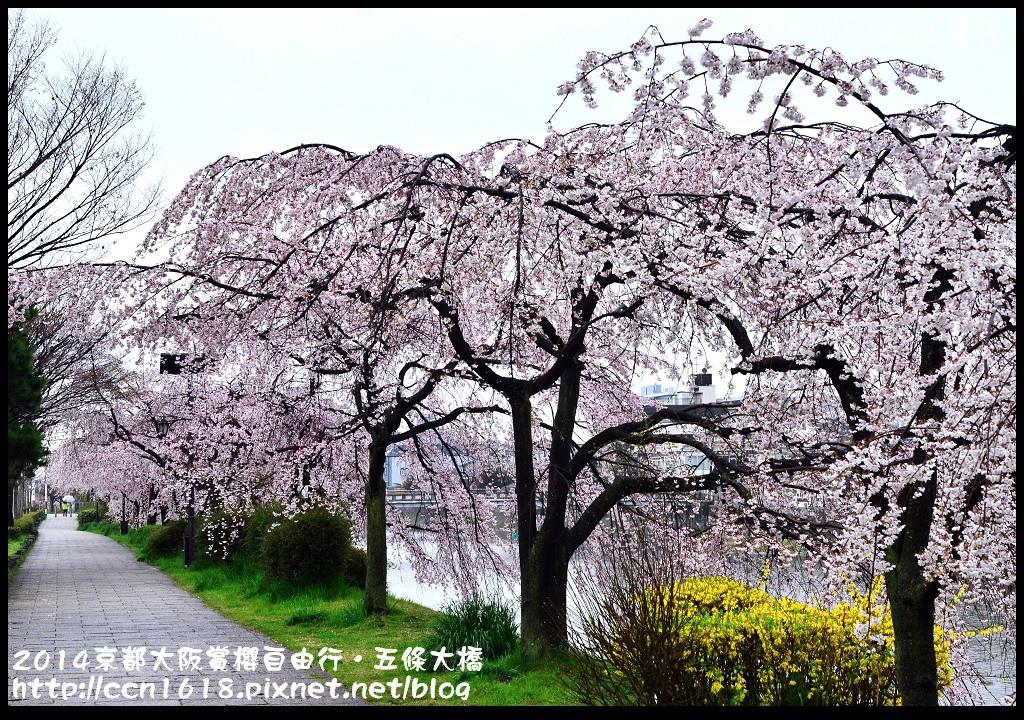 2014京都大阪賞櫻自由行.五條大橋DSC_0732