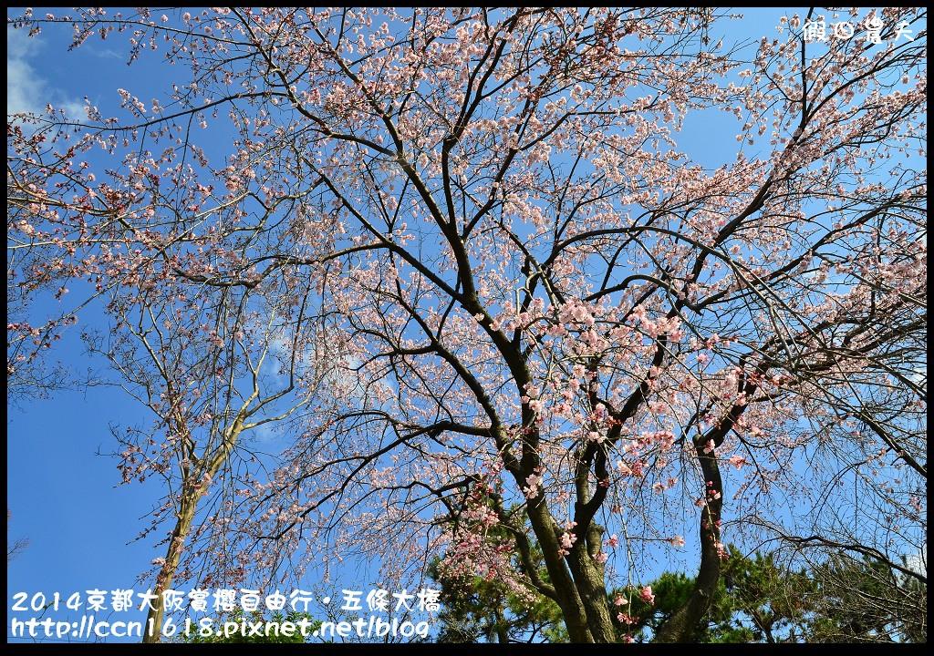 2014京都大阪賞櫻自由行.五條大橋DSC_8621