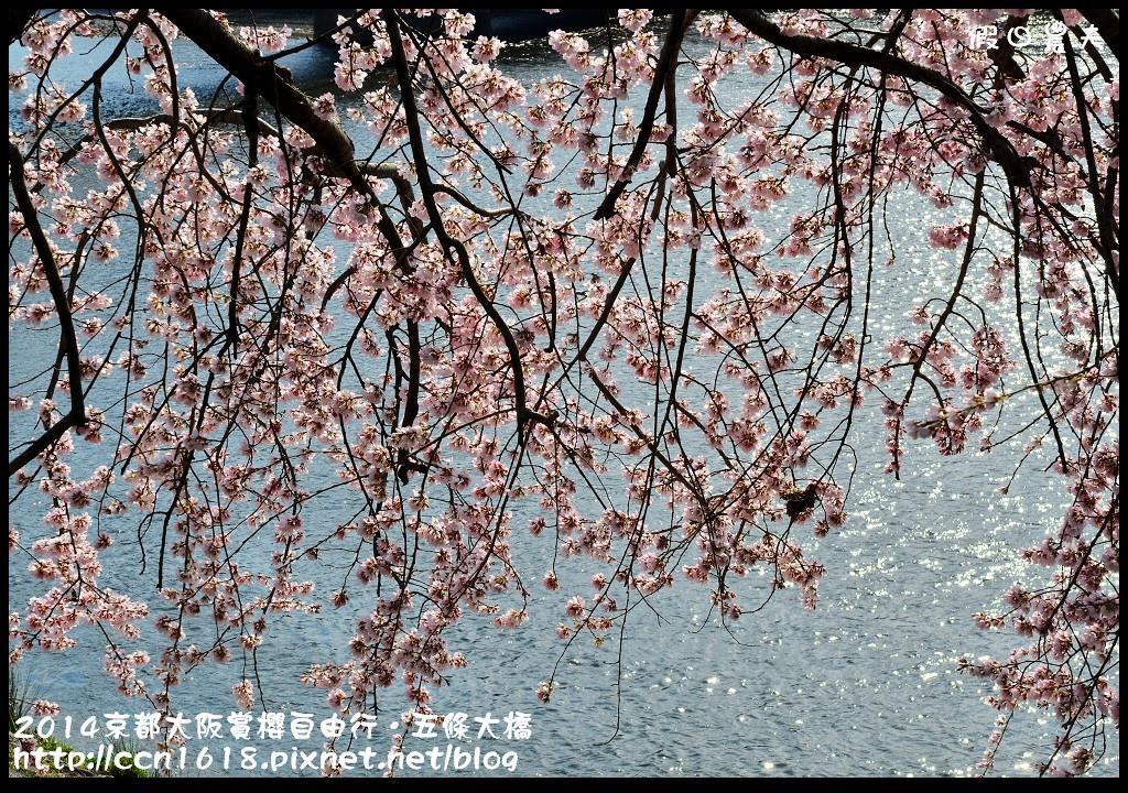 2014京都大阪賞櫻自由行.五條大橋DSC_8682