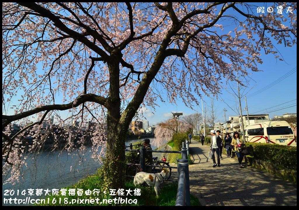 2014京都大阪賞櫻自由行.五條大橋DSC_8695