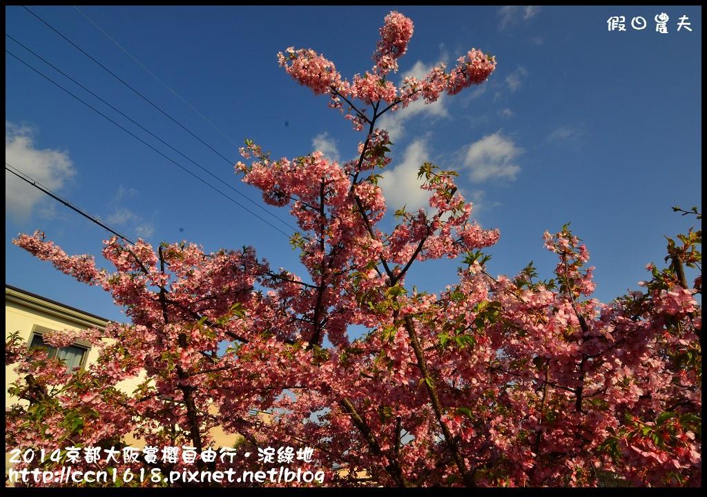 2014京都大阪賞櫻自由行.淀綠地DSC_8738