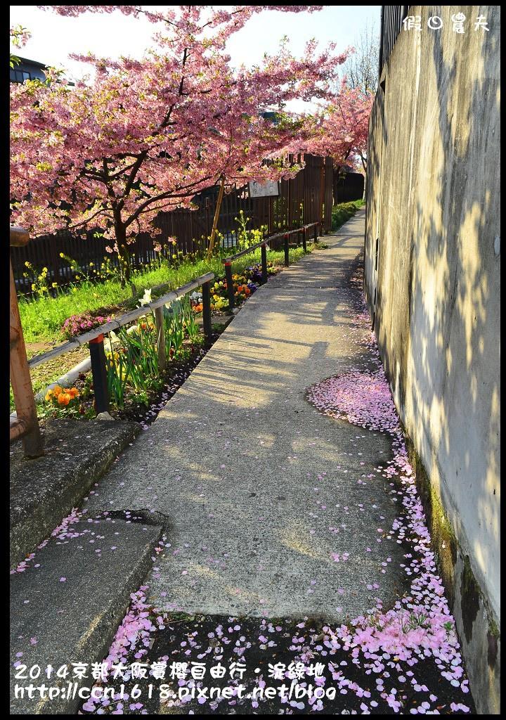 2014京都大阪賞櫻自由行.淀綠地DSC_8756
