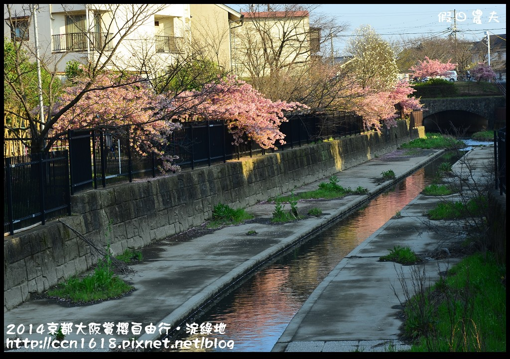 2014京都大阪賞櫻自由行.淀綠地DSC_8855