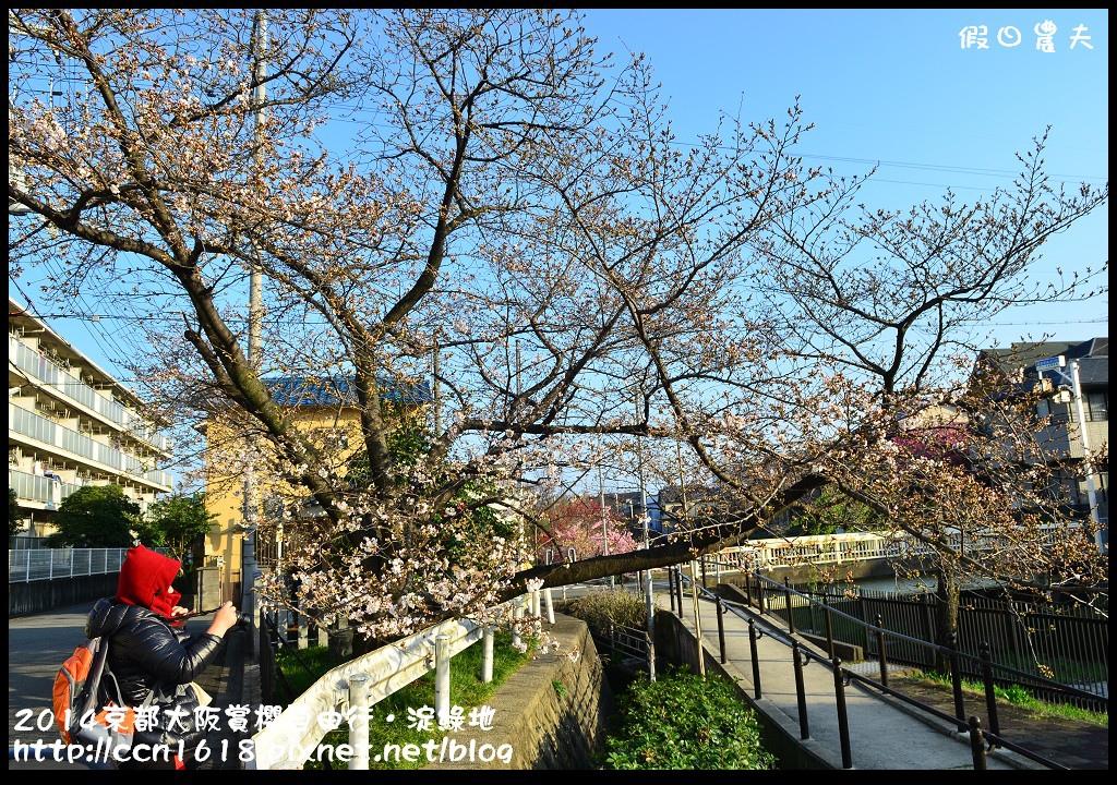 2014京都大阪賞櫻自由行.淀綠地DSC_8861