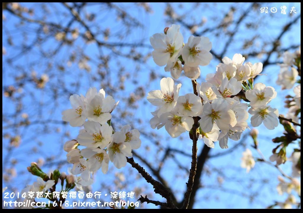2014京都大阪賞櫻自由行.淀綠地DSC_8865
