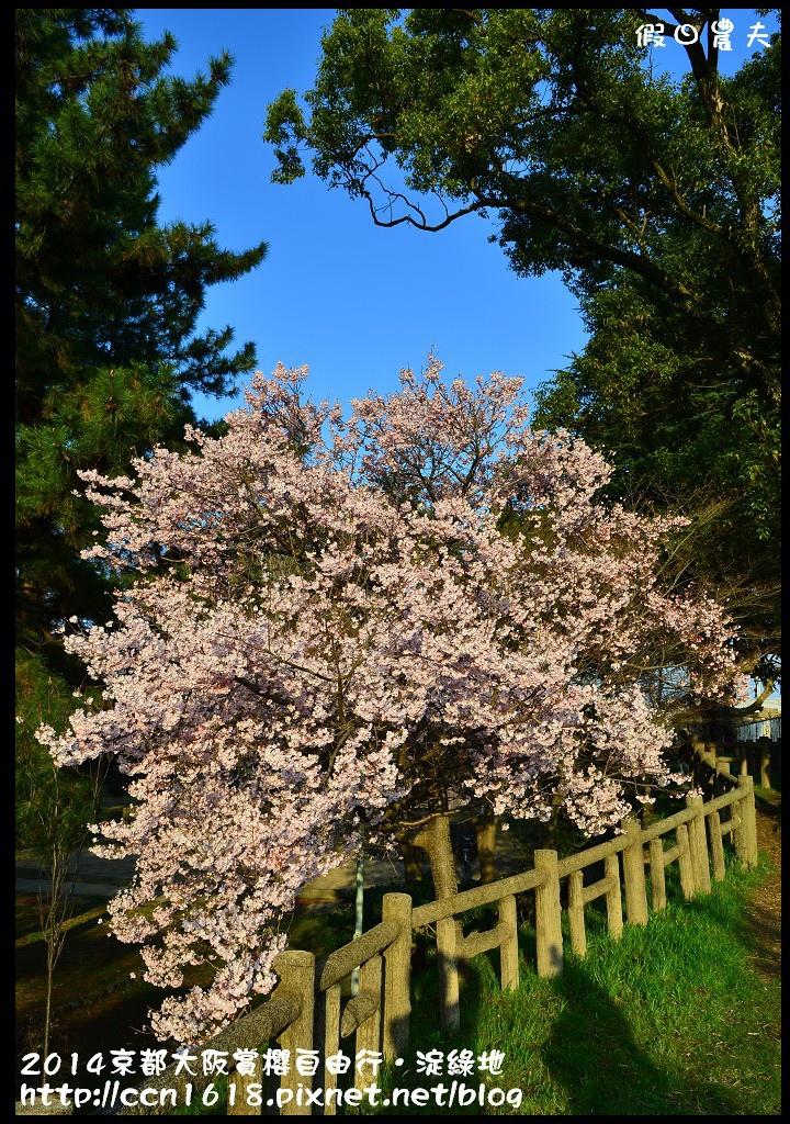 2014京都大阪賞櫻自由行.淀綠地DSC_8887