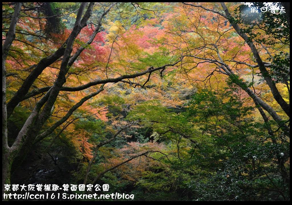 京都大阪賞楓趣-箕面國定公園DSC_6465