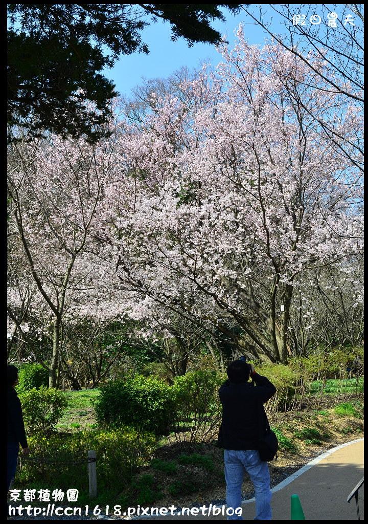 京都植物園DSC_9316