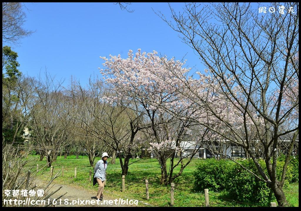 京都植物園DSC_9321