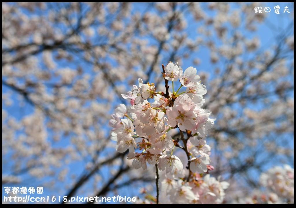 京都植物園DSC_9325