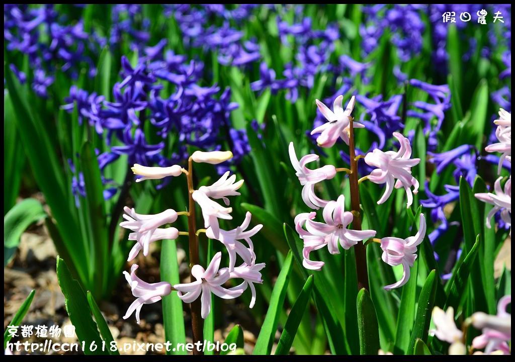 京都植物園DSC_9341