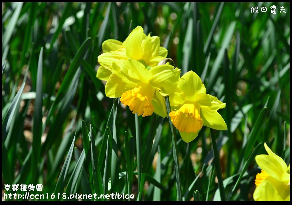 京都植物園DSC_9344