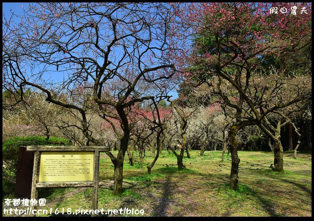 京都植物園DSC_9351
