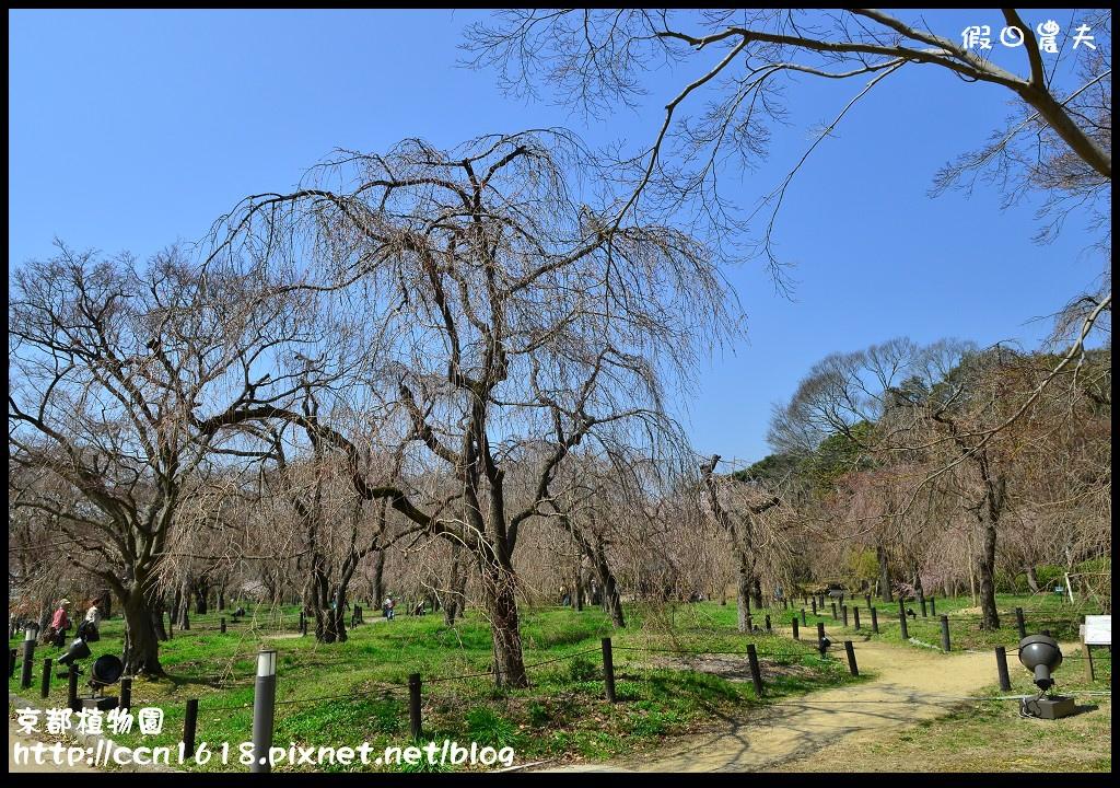 京都植物園DSC_9354