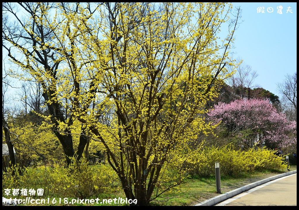 京都植物園DSC_9355
