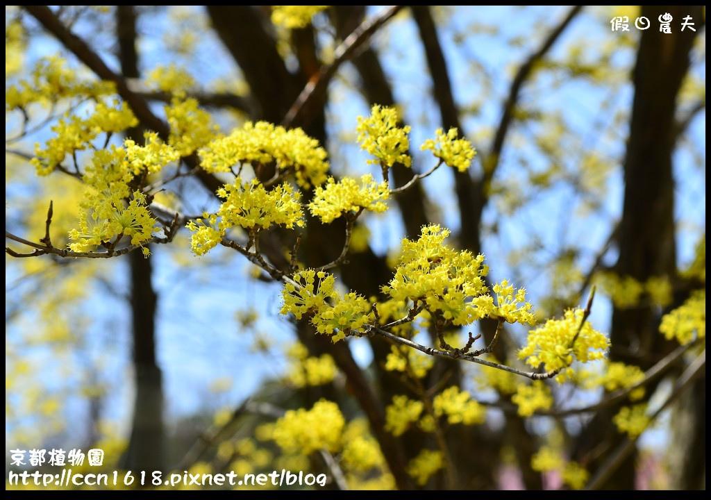 京都植物園DSC_9357