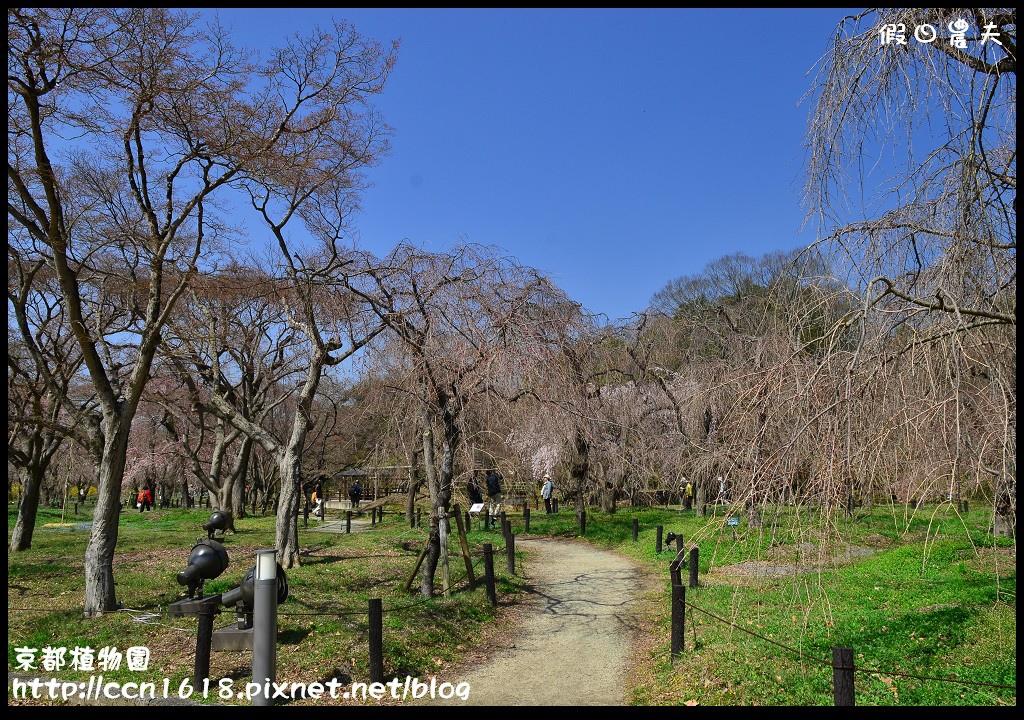 京都植物園DSC_9365