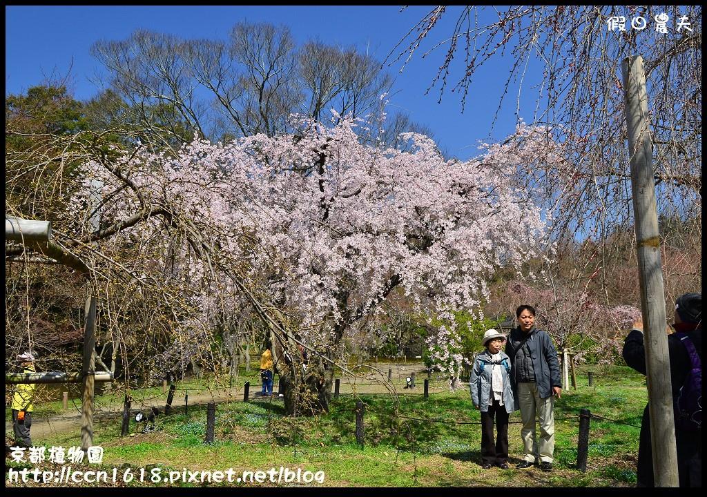 京都植物園DSC_9367