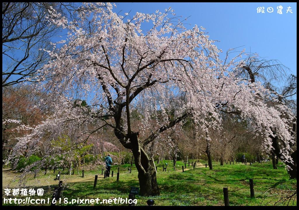 京都植物園DSC_9369