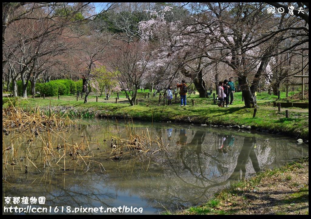 京都植物園DSC_9378