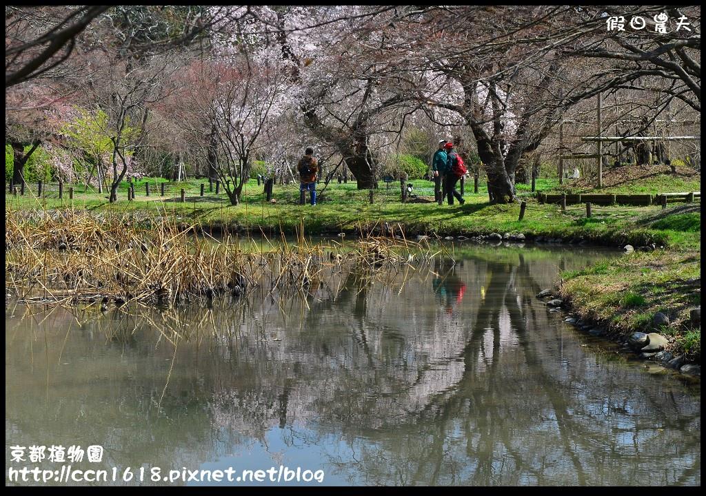京都植物園DSC_9381