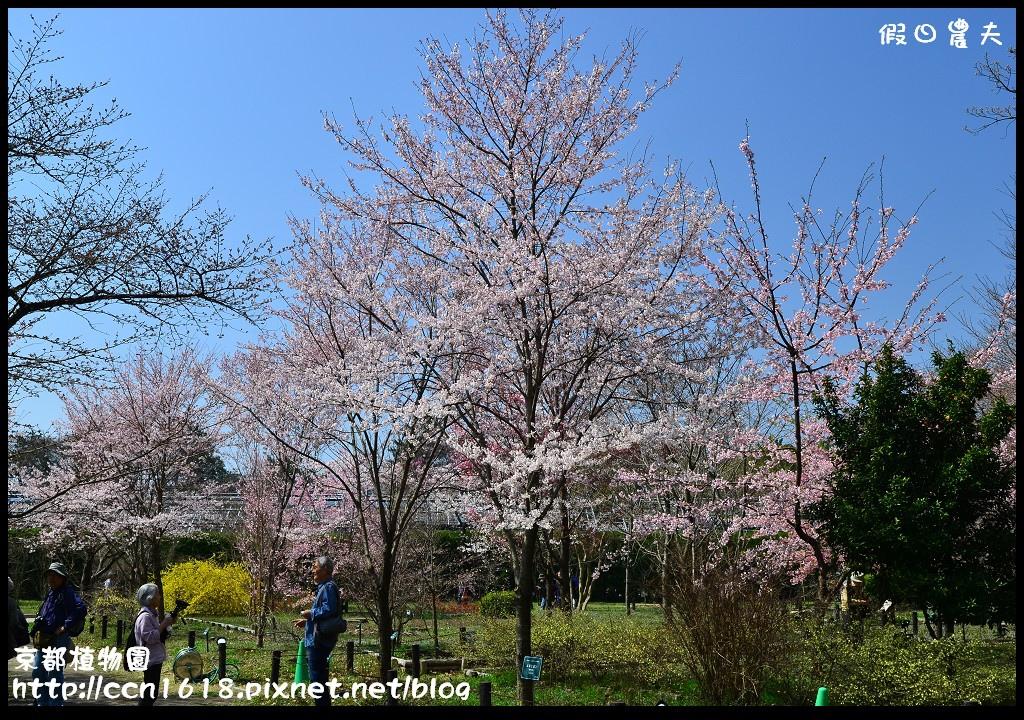 京都植物園DSC_9384