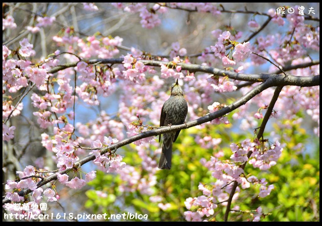 京都植物園DSC_9391