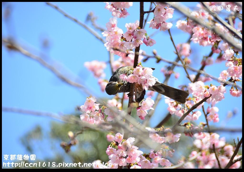 京都植物園DSC_9393