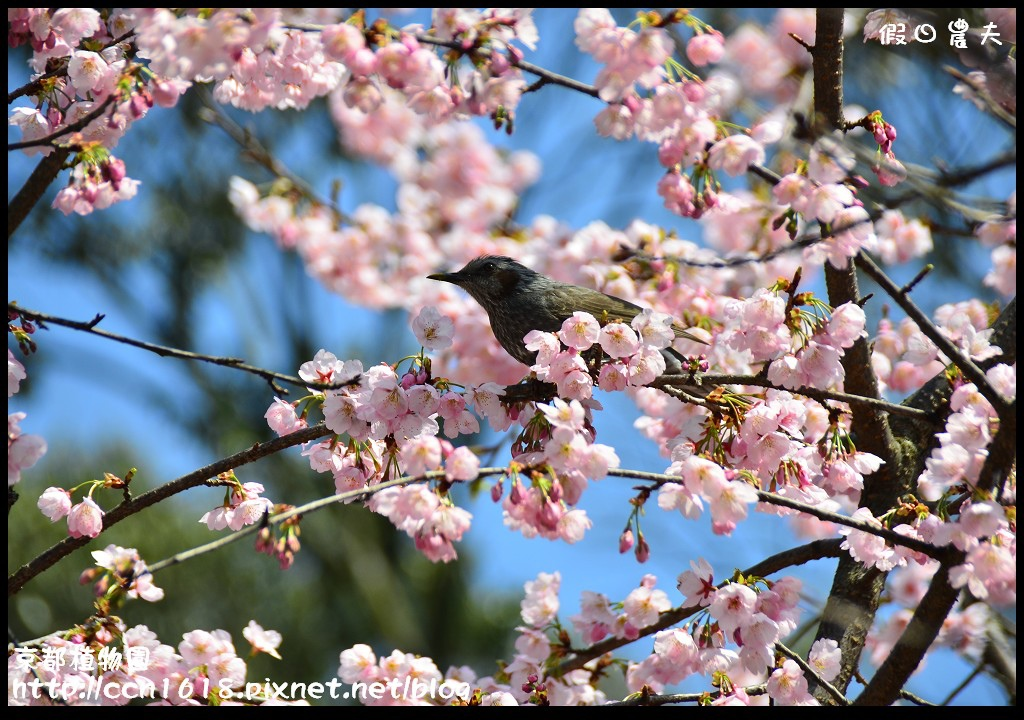 京都植物園DSC_9412