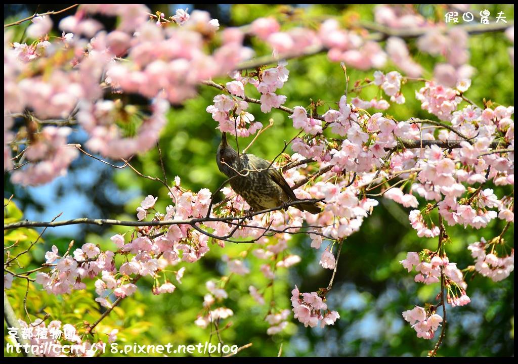 京都植物園DSC_9451