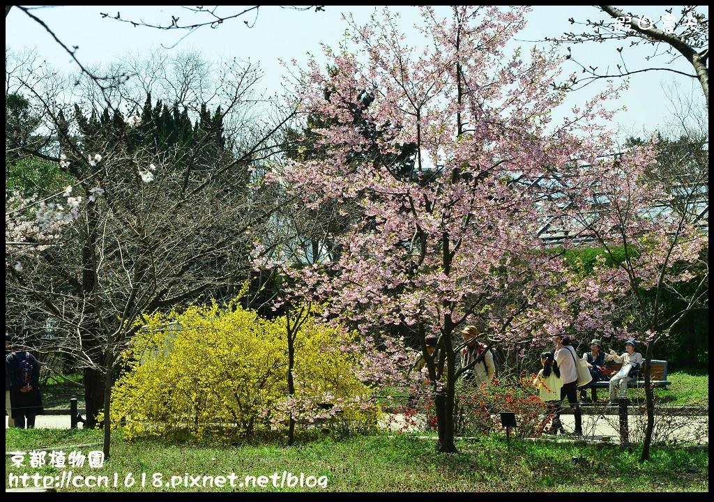 京都植物園DSC_9498