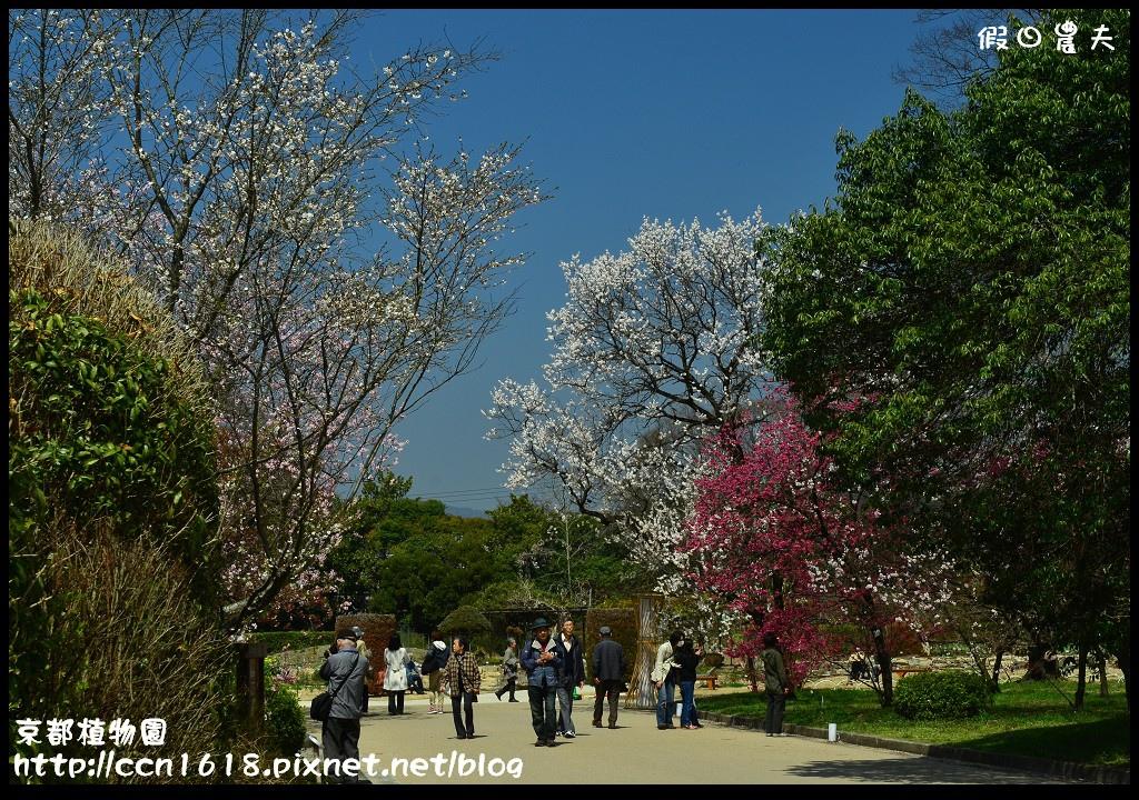 京都植物園DSC_9504